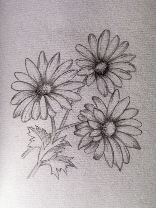 Daisy Pencil Drawing