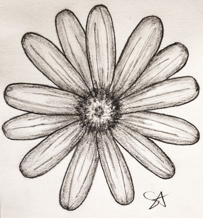 Nice Daisy Pencil Drawing Techniques for Beginners Daisy Pencil Sketch   Tattoos   Up Tattoos, Tattoos, Cover Images