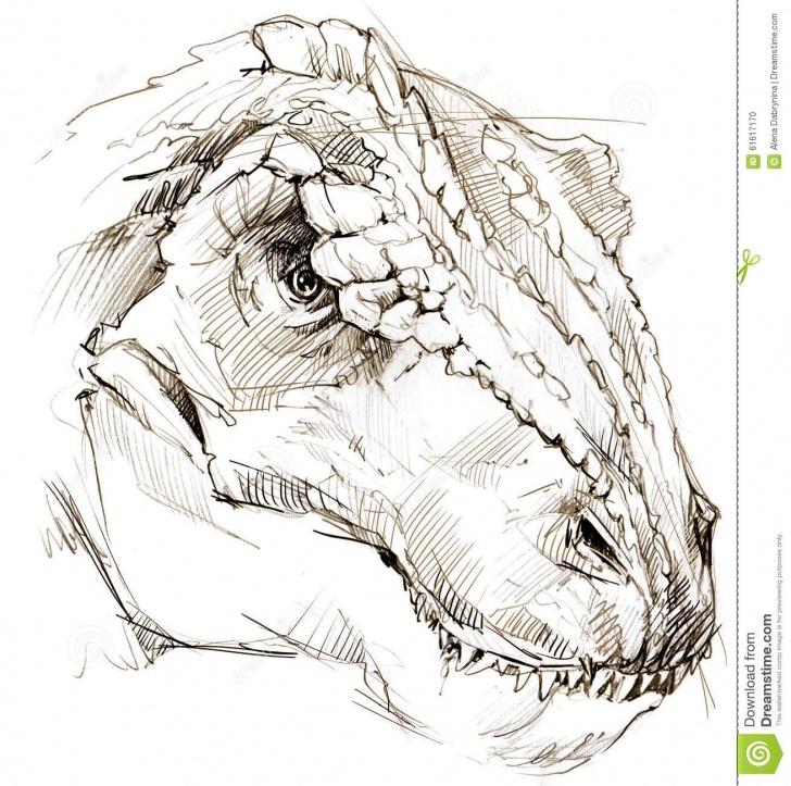 Nice Dinosaur Pencil Drawing Lessons Dinosaur. Dinosaur Drawing Pencil Sketch Stock Illustration Photo