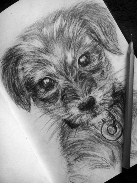 Nice Dog Pencil Sketch Easy Puppy #drawing #pencil #cute #dog Pencil Drawing Of A Puppy | Art Photo