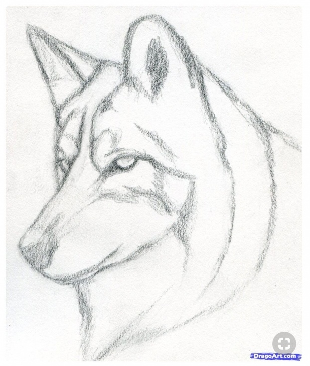 Nice Dog Simple Pencil Drawing Tutorials Simple Quaint Dog Drawing | Hails In 2019 | Drawings, Pencil Art Photos