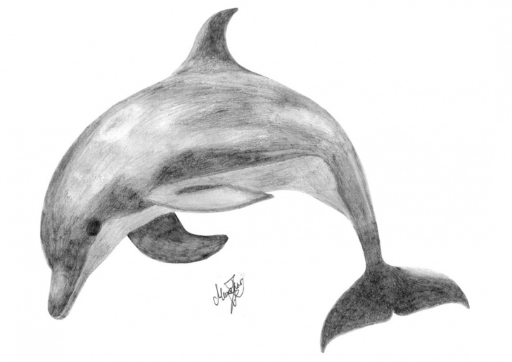 Nice Dolphin Pencil Drawing for Beginners Free Dolphin Drawings, Download Free Clip Art, Free Clip Art On Photos