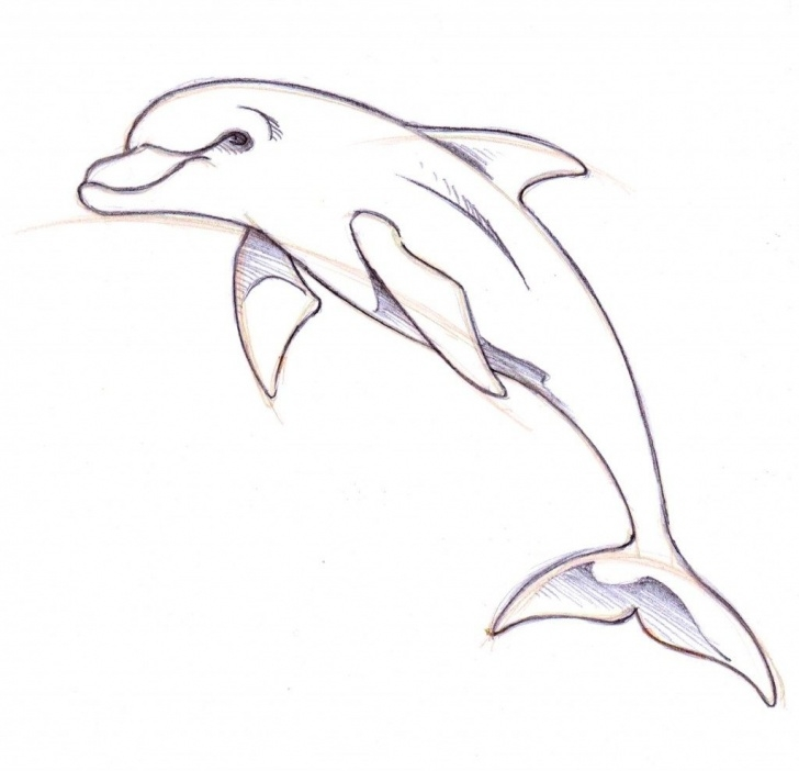 Nice Dolphin Pencil Drawing for Beginners Simplistic Drawing Pictures Of Dolphins Easy To Draw Dolphin Pic