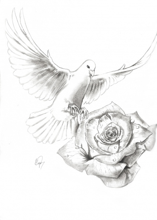 Nice Dove Drawings Pencil Courses Dove Drawing At Paintingvalley | Explore Collection Of Dove Drawing Pic
