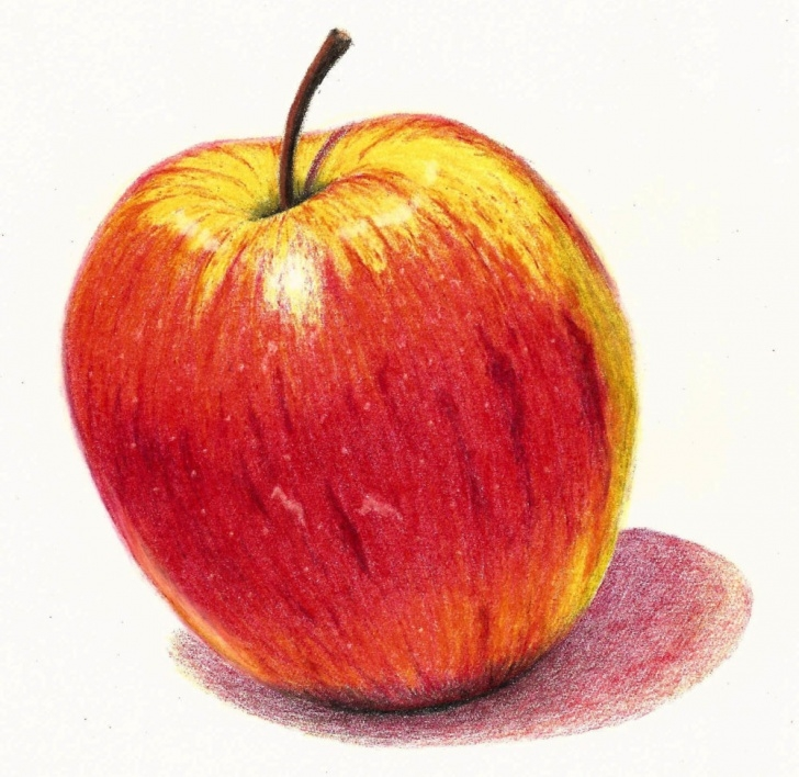 Nice Drawing Fruit With Colored Pencils Step by Step Coloured Pencil Drawing Lessons From Unit 5 Of The Complete Drawing Image