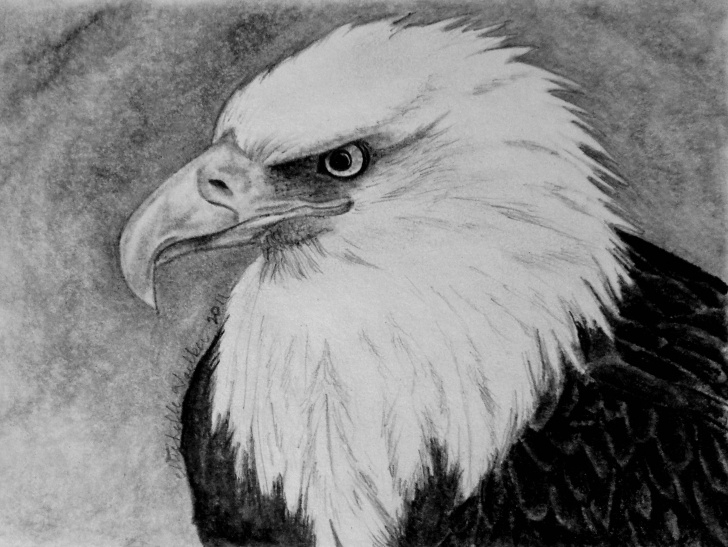 Nice Eagle Pencil Sketch for Beginners Eagle Pencil Drawing | Michelle's Drawings | Pencil Drawings Pic