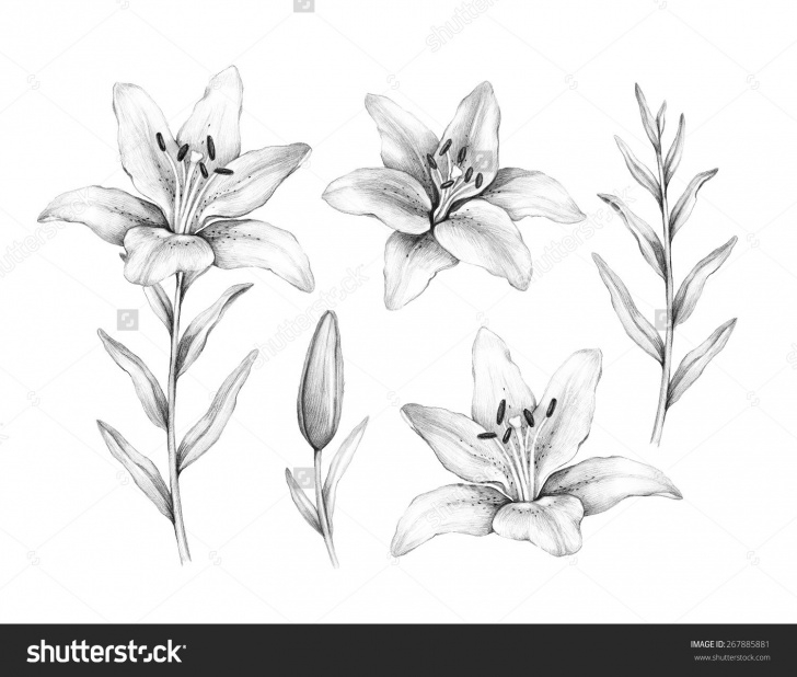 Nice Floral Pencil Drawings for Beginners 8+ Floral Pencil Drawings - Pencil Drawing - Drawing Sketch Painting Image