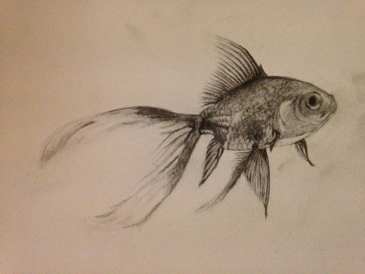 Nice Goldfish Pencil Drawing Courses Goldfish Pencil Sketch And Fish Pencil Sketch | Drawing Artsy - 8+ Images