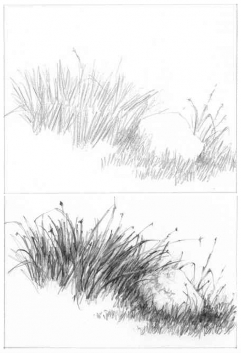 Nice Grass Pencil Drawing Easy Grass Drawing At Paintingvalley | Explore Collection Of Grass Photos