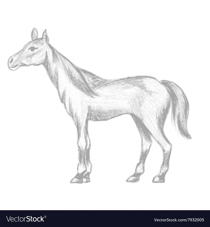 Nice Horse Pencil Drawing Ideas Hand Drawn Horse Pencil Drawing Of Mare Pic