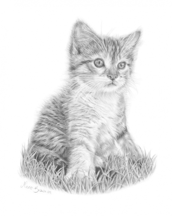 Nice Kitten Pencil Drawing Courses Kitten Pencil Drawing At Paintingvalley | Explore Collection Of Pictures