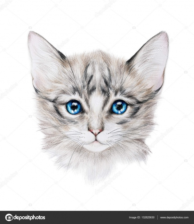 Nice Kitten Pencil Drawing Tutorials Pencil Drawing Of A Grey Kitten — Stock Photo © Savitskiy.lev #132825630 Images