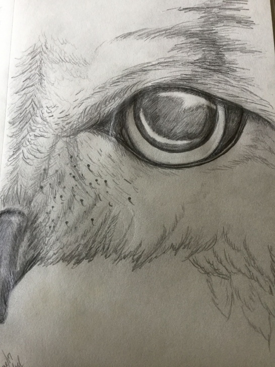 Nice Owl Pencil Sketch Tutorials Pencil Drawing Of Owl Eye | Michelle In 2019 | Pencil Drawings, Owl Pictures