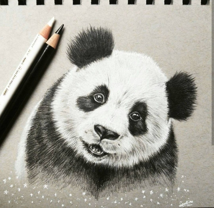 Nice Panda Pencil Drawing Easy Panda Drawing | Pandas In 2019 | Panda Drawing, Pencil Drawings Picture