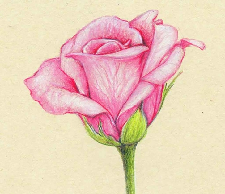 Nice Pencil Drawings Of Flowers And Butterflies With Colours for Beginners Drawings Of Colour Flowers - Drawingsketch Picture