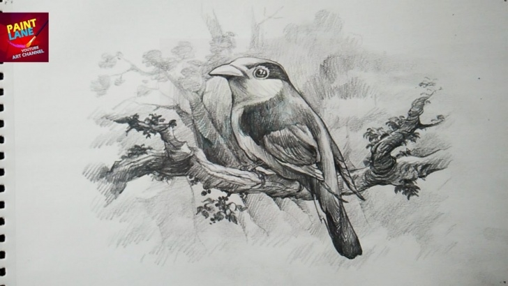 Nice Pencil Shading Painting Ideas How To Draw A Bird With Pencil | Drawing | Shading Image