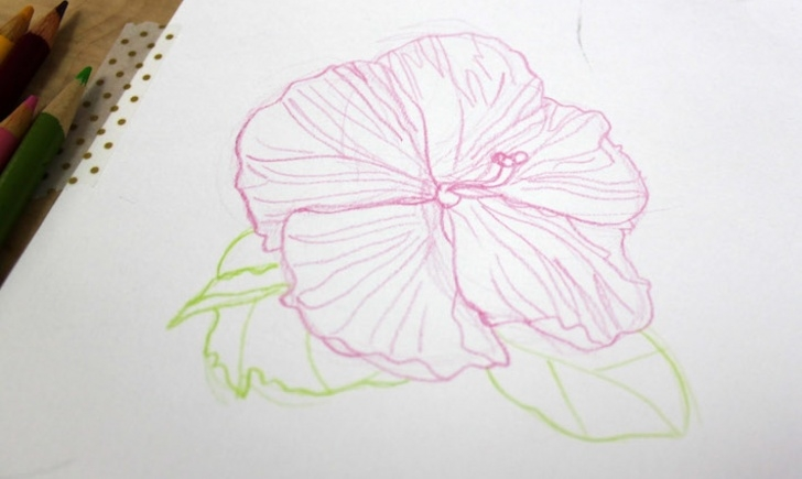 Nice Pencil Sketch Drawing Of Flowers Step by Step Drawing Flowers In Colored Pencil: A Simple Tutorial Picture