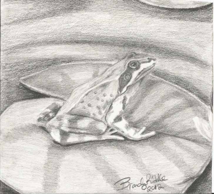 Nice Pencil Sketch Of Frog Free Quick Pencil Sketch Of Frog On Lilly Pad | Older Artsbriddle Photos