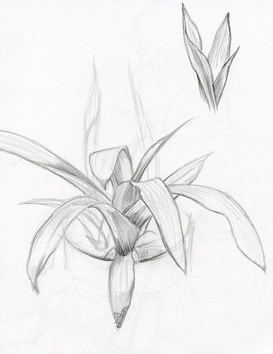 Nice Plant Pencil Drawing Lessons Pencil Sketch | Pencil Shading In 2019 | Sketches, Pencil Drawings Photo