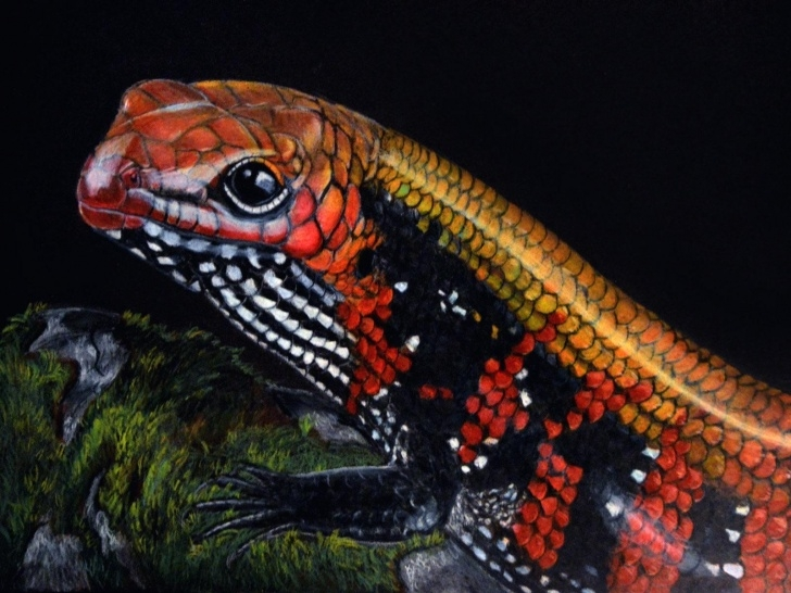 Nice Prismacolor On Black Paper Courses Fire Skink, Prismacolor Pencils On Black Paper : Reptiles Pic