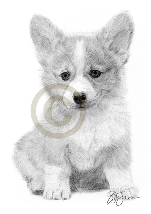 Nice Puppy Pencil Drawing Ideas Realistic Puppy Drawing At Paintingvalley | Explore Collection Images