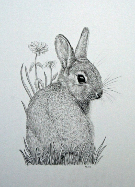 Nice Rabbit Pencil Art Free Original Mounted Pencil Drawing Of Baby Bunny By Vicksanimalart Pic