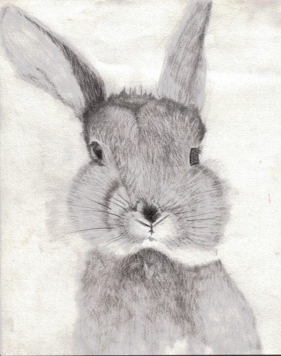 Nice Rabbit Pencil Drawing Free Bunny Rabbit Pencil Drawing 5In X 7 In Images