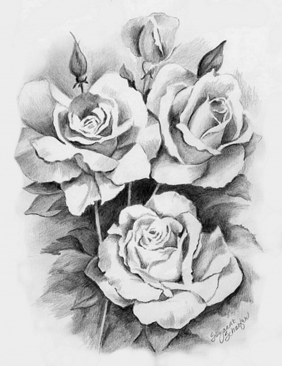 Nice Rose Flower Pencil Drawing Lessons Pencil Drawing Roses | Drawings | Pencil Drawings, Pencil Art Images