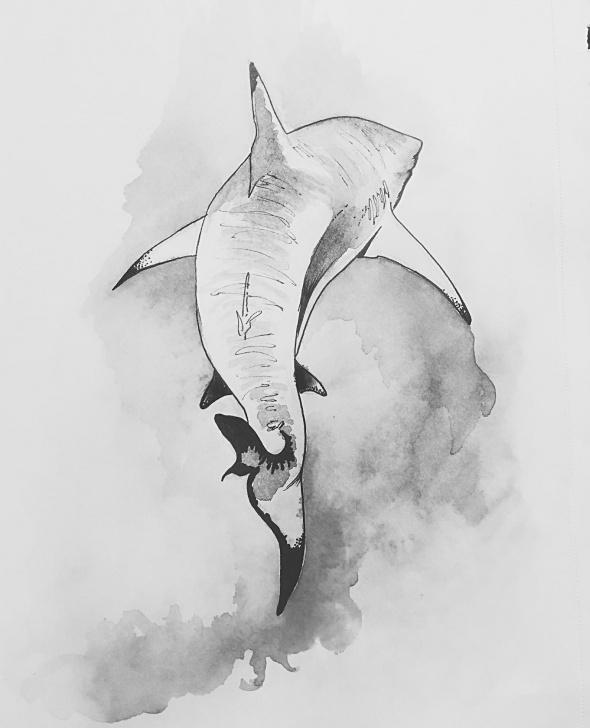 Nice Shark Pencil Drawing Free Shark (Pencil, Pen, Watercolour) : Drawing Photo
