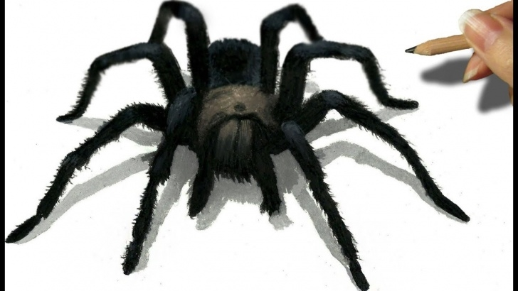 Nice Spider Pencil Drawing Simple 3D Pencil Drawing Of A Black Spider | Jasmina Susak Images