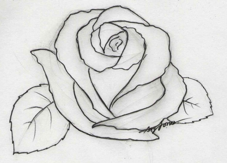 Outstanding 3D Rose Pensil Sketch Step By Step Tutorial Pencil Sketch Of Rose Flower At Paintingvalley | Explore Pictures