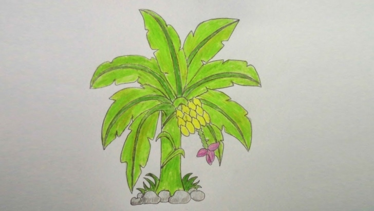 Outstanding Banana Tree Pencil Drawing Courses How To Draw Colour Pencil Banana Tree Step By Step ||Very Easy|| Photos