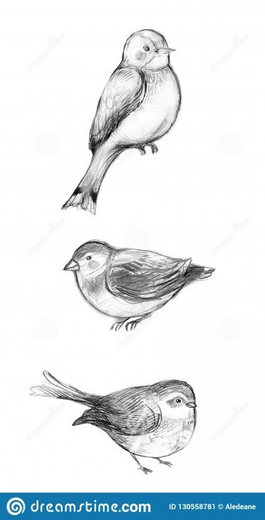Outstanding Birds Pencil Drawing Step by Step Pencil Drawings Of Three Cute Birds Stock Illustration Picture