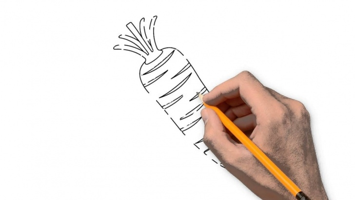 Outstanding Carrot Pencil Drawing Ideas Carrot Nature Pencil To Draw Step By Step Photo