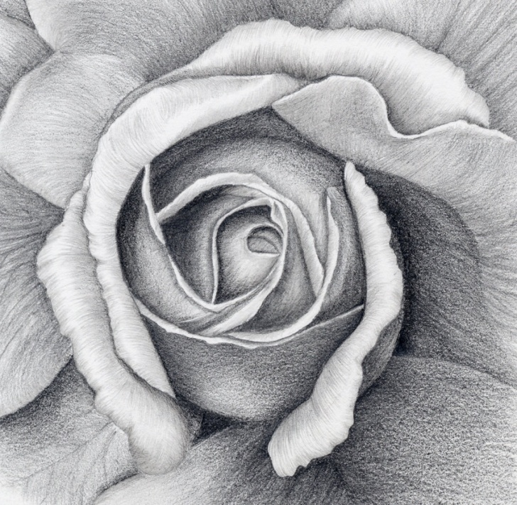 Outstanding Charcoal Flower Drawings Step by Step Still Life Flower Drawing And Still Life Drawing Flowers Still Life Pic