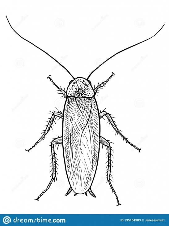 Outstanding Cockroach Pencil Drawing Techniques Cockroach Drawing Cartoon Pencil Video Black Dead Outline — Firstdacha Pic
