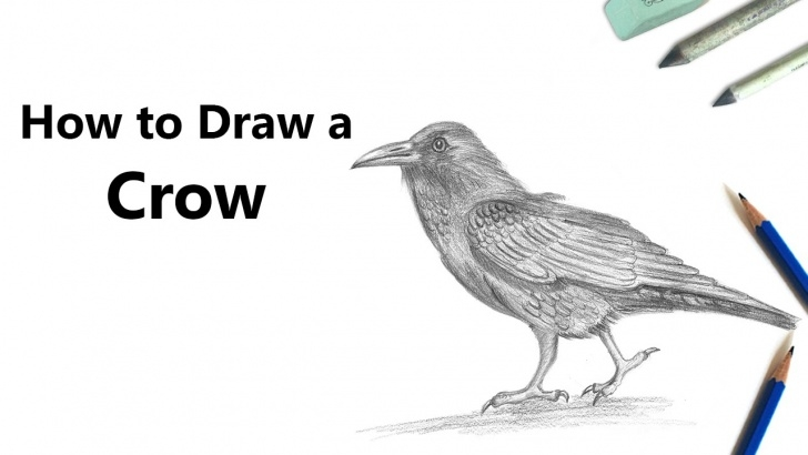 Outstanding Crow Pencil Drawing Free How To Draw A Crow With Pencil [Time Lapse] Pic