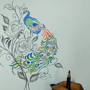 Outstanding Cute Colored Pencil Drawings Free Cute Drawings - Color Pencil Drawing An Amazing Peacock #easy Photo