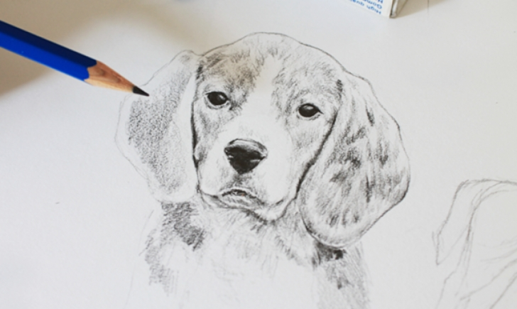 Outstanding Dog Drawings In Pencil Step By Step Courses How To Draw A Dog: A Step-By-Step Tutorial Images