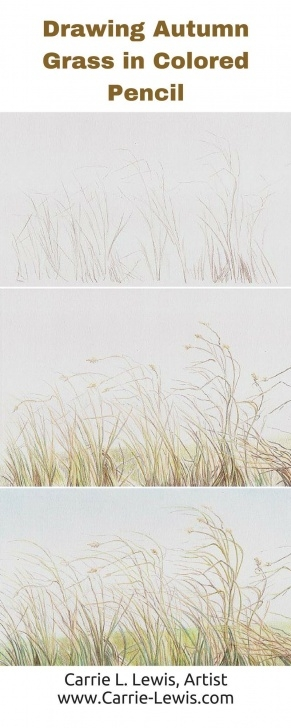 Outstanding Drawing Grass With Pencil Free How To Draw Autumn Grass In Colored Pencil | Direct Drawing Method Pic