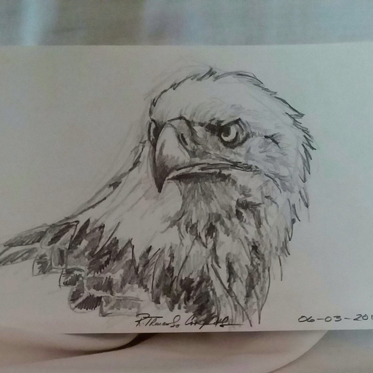 Outstanding Eagle Pencil Drawing Tutorial Eagle Bald Eagle American Eagle Pencil Drawing Original Pic