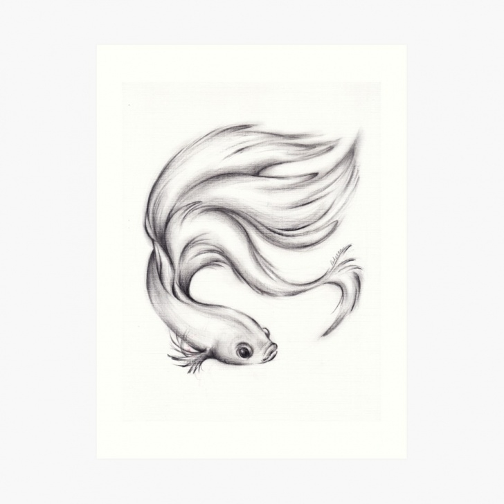 Outstanding Fish Pencil Art Simple River Belle - Charcoal Pencil Drawing Of A Siamese/betta Fighting Fish |  Art Print Pictures