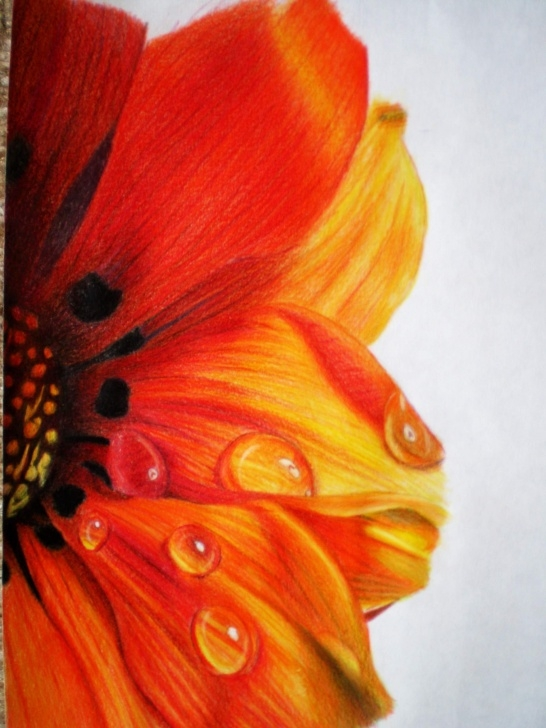 Outstanding Flower Colour Pencil Drawing Ideas 45 Beautiful Flower Drawings And Realistic Color Pencil Drawings Pic