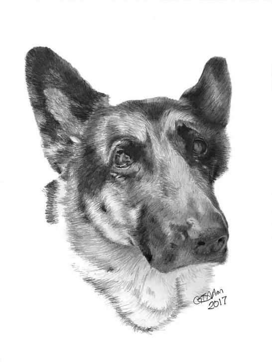 Outstanding German Shepherd Drawings In Pencil Techniques German Shepherd Drawing | Dogs In 2019 | Drawings, Pencil Drawings, Art Pictures