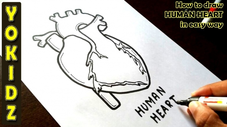 Outstanding Human Heart Pencil Drawing Ideas How To Draw Human Heart In Easy Way Pics