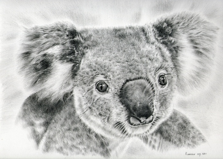 Outstanding Koala Pencil Drawing Simple Photorealistic Pencil Drawings For Koala Hospital - Remrov's Artwork Pictures