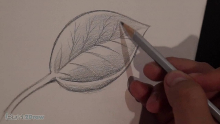 Outstanding Leaf Pencil Shading Tutorials How To Draw & Shade A Leaf (Sketching Practice Tutorial) Photos