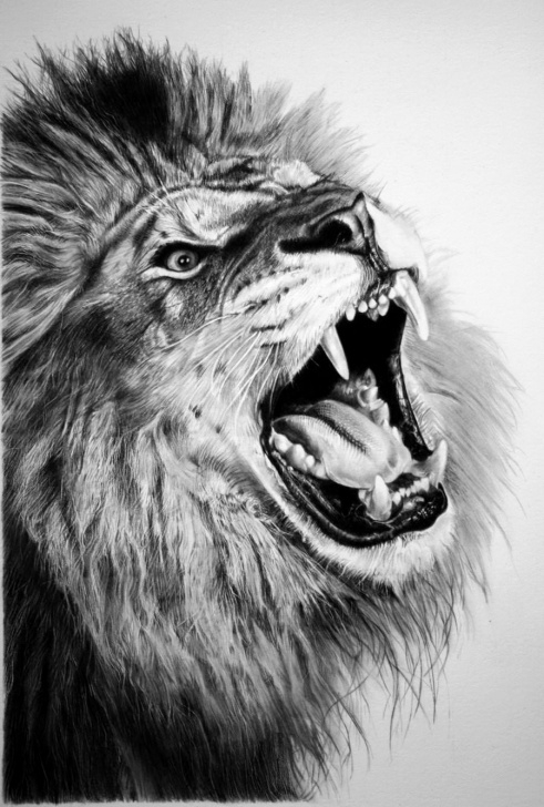 Outstanding Lion Face Pencil Drawing Ideas Lion Face Sketch Images At Paintingvalley | Explore Collection Images