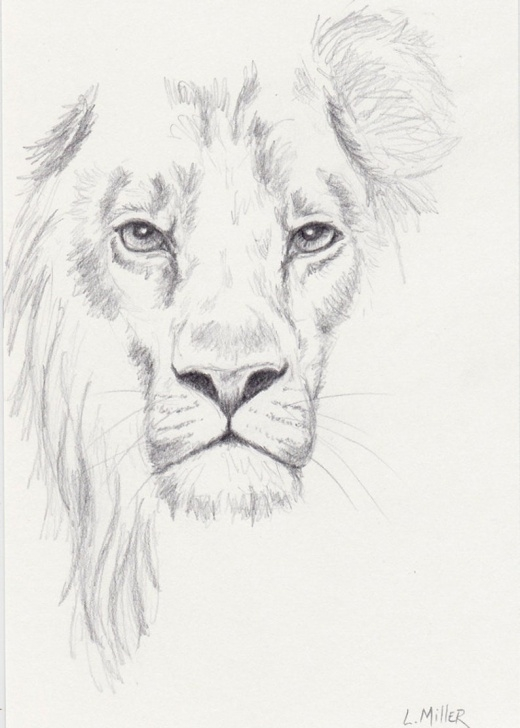 Outstanding Lion Pencil Drawing Simple Lion Pencil Drawing, Original 5X7 Big Cat Sketch, Lion Fine Art Picture