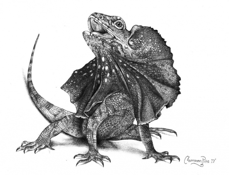 "Outstanding Lizard Pencil Drawing Techniques for Beginners Frilled Lizard."" Pencil Drawing By @cameronxarts On Instagram Pictures"